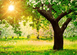 Tree insprational